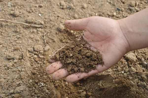 Komposterde kaufen: Das sollten Sie beachten